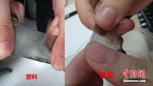 真紫菜泡水后吸收水分,光滑,而塑料薄膜不吸水,不光滑。制图:<a target='_blank' href='http://www.chinanews.com/' ><p align=