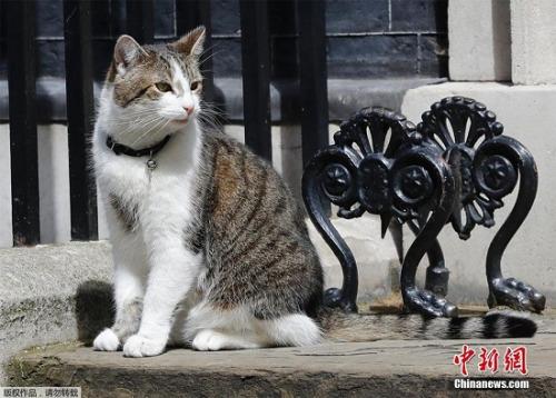 """资料图:猫咪""""拉里"""""""