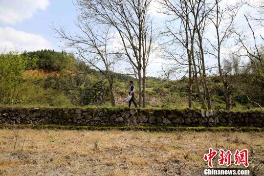 客家人在迁徙至范塅后在当地结草为庐,开荒种地,繁衍生息。在狭长的河谷地带垦荒种地,沿山脚造田。 黄一魏 摄