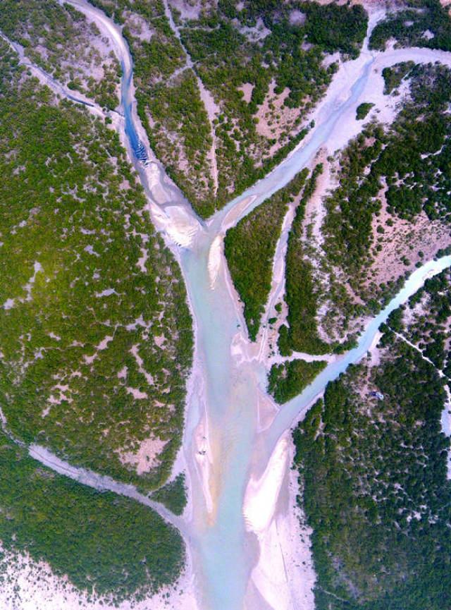 这是4月20日在广西北海市金海湾红树林生态保护区拍摄的红树林。 新华社记者 黄孝邦 摄