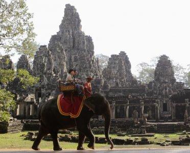 世界动物保护协会:亚洲旅游业中大象生存环境堪忧
