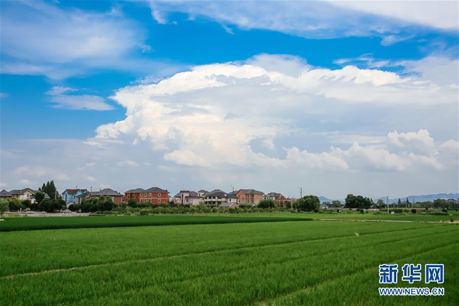 (砥砺奋进的五年·绿色发展 绿色生活)(3)浙江余杭永安村:保护基本农田,助力绿色发展