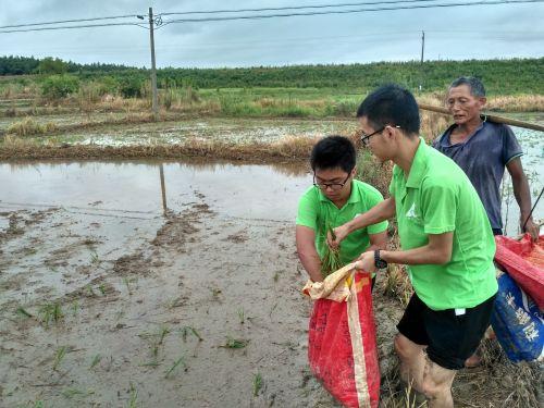 植保专业的王刚、李富东在李伯伯的指导下学习二晚抛秧作业