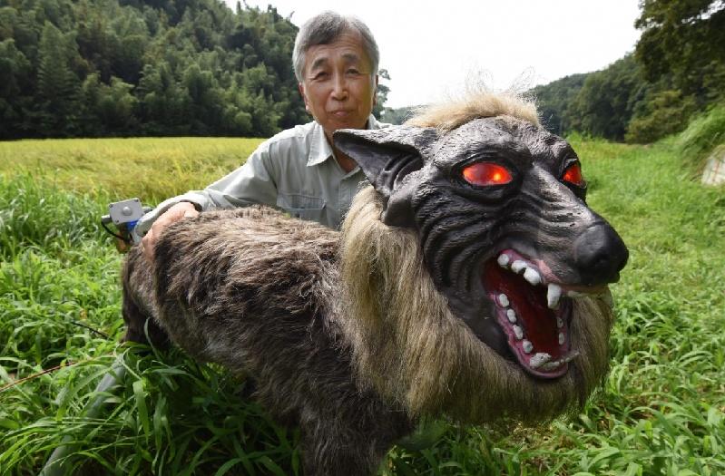 日本 超极怪兽狼 机器人稻田边守护庄稼