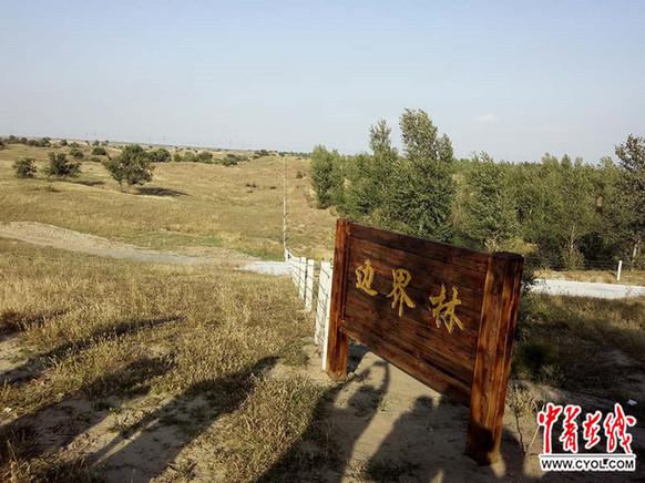【中青在线】沙坨子上种出万亩生态林