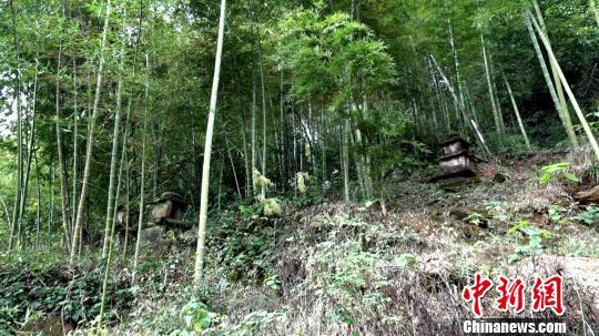 湖南郴州發現墓塔林 其中有罕見雙子七級浮屠