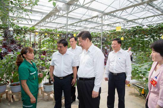 2015年6月16日下午,习近平在遵义县枫香镇花茂村的现代高效农业智能温控大棚,向正在劳动的村民了解增收致富情况。新华社记者 黄敬文 摄