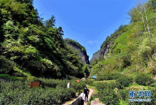 这是武夷山景区内的牛栏坑(3月31日摄).新华社记者魏培全摄