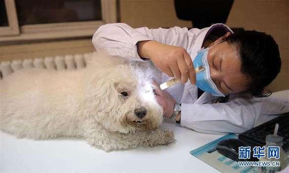 """看病动辄几千元,这些宠物医院为何能""""任性""""收费?"""