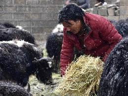 (社会)(1)青海玉树积极应对雪灾