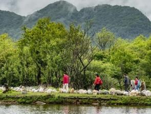 (壮丽70年·奋斗新时代·图文互动)(6)从开山伐木到全面保护——神农架国家公园的生态协奏曲