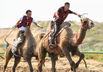 (社会)(3)欢聚沙漠那达慕