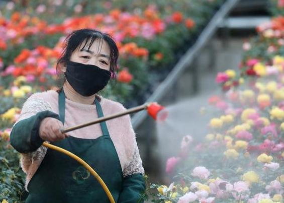 (经济)(4)辽宁海城:设施农业复工忙