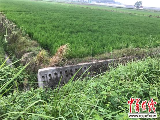 """【砥砺奋进的五年】湖南长沙:生态农田会""""呼吸"""""""