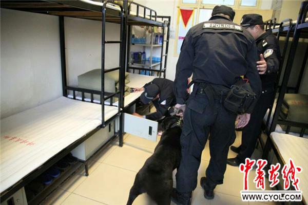 安徽蚌埠强制隔离戒毒所使用警犬提升安防实战能力