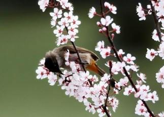 #(春季美丽生态)(4)鸟语花香