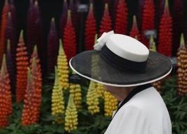 (国际)(2)来伦敦看切尔西花展